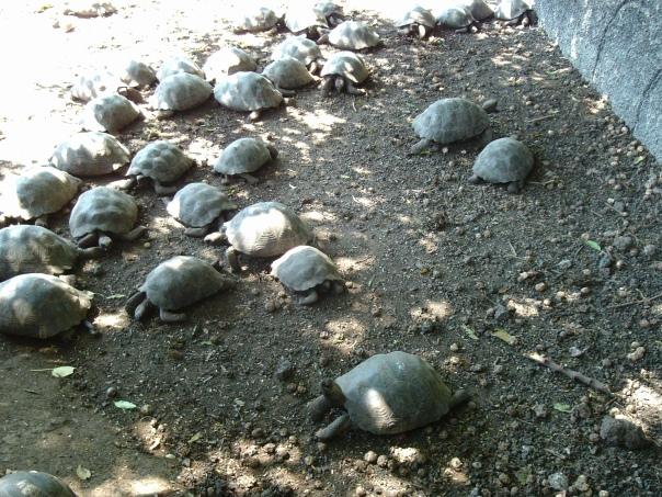 Look at all of the baby tortoises!