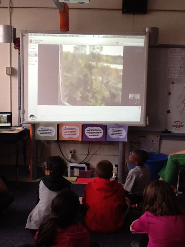During our Skype session, Mr. Smith showed us some of the pine trees in North Carolina - where he was located during our mystery Skype session.