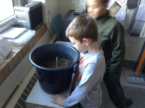 Trip and Isaiah are checking our the seed's new home.