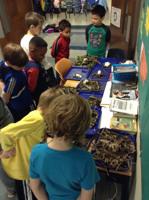 After creating our nests, we did a gallery walk to learn from others.