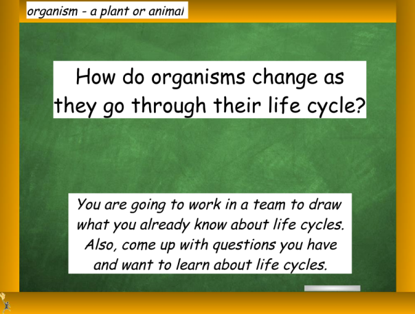 We discussed the question above and then students were given a task to work in a team to demonstrate what they already know about life cycles.