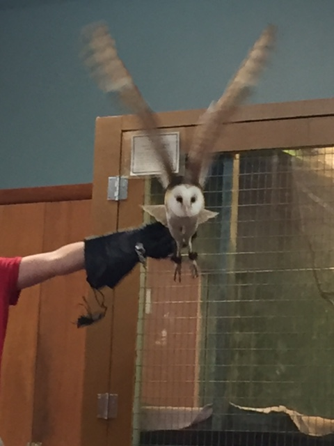 Check out this amazing owl from our field trip!