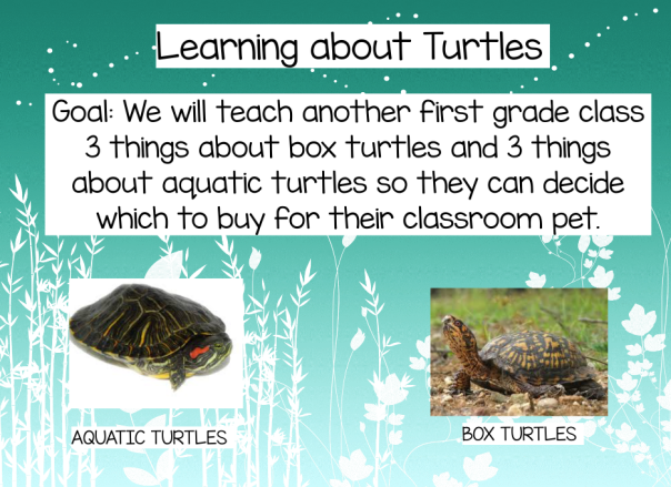 "This is the ""official"" goal we used to guide our research and discovery about turtles."