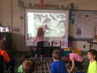 We talked about what we noticed as we observed the penguins.