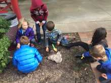 In celebration of outdoor learning, we had a chance to do some planting of our own!